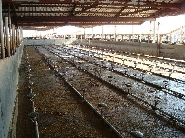 Ozone used for teat wash in spray pen