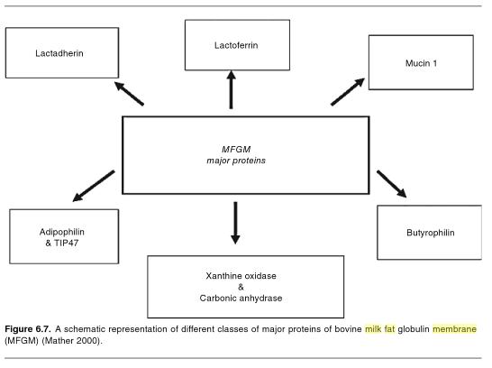 health benefits of the milk fat globule membrane dairy moos  diagram of milk fat #15